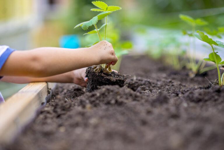 Comissão de Educação aprova criação do Programa Horta Escolar na Paraíba